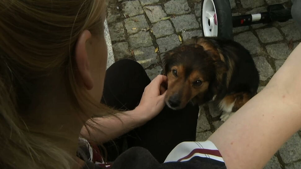 """Pies ruszył pociągiem do Gdyni. """"Historia z romansem w tle"""""""