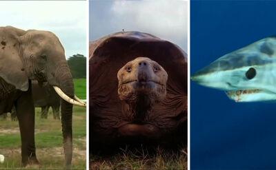 """""""Dzika przyroda ginie coraz szybciej"""". Jak chronić zagrożone gatunki?"""
