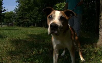 Ofiary letniego wypoczynku. Do schronisk w wakacje trafia wiele psów