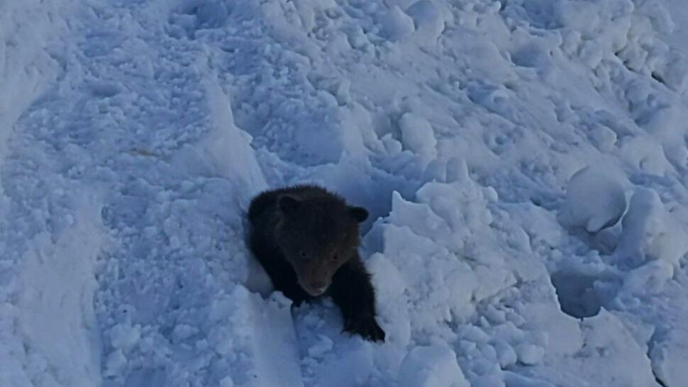 Obudziła się niedźwiedzia rodzina. W Tatrach zamknięto kilka szlaków