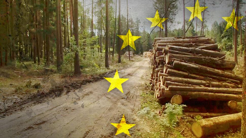 Wycinka w Puszczy Białowieskiej nie została wstrzymana