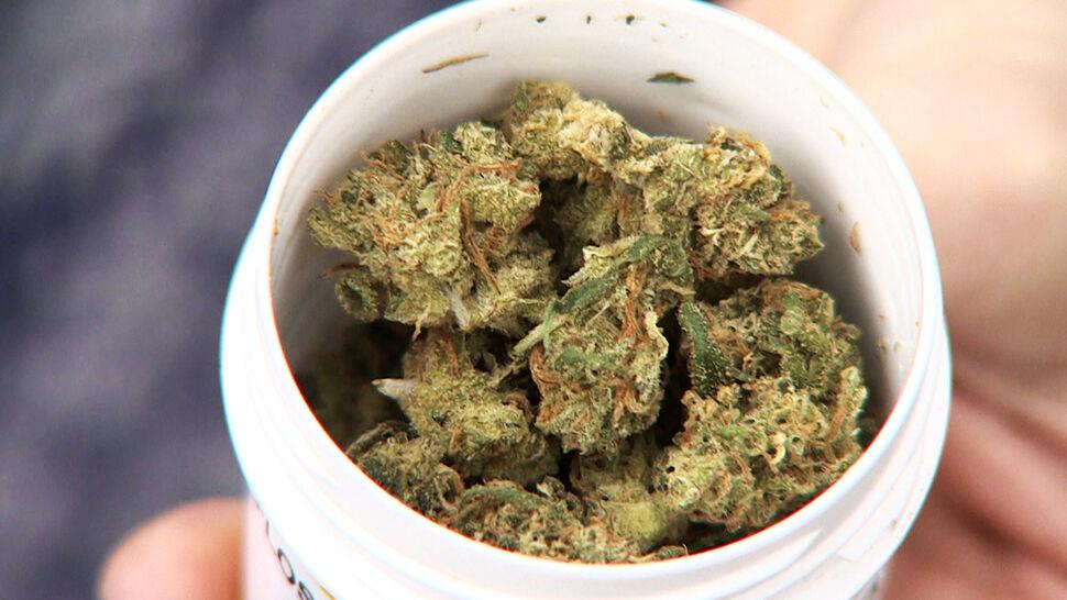 Medyczna marihuana trafiła do Polski. Gram ma kosztować 65 złotych