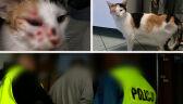 """Do kota """"strzelano z niewielkiej odległości"""". 39-latek zatrzymany"""