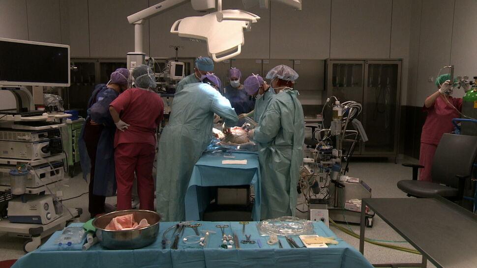 Wystarczyła zmiana procedur. Rekordowa liczba przeszczepów w Zabrzu