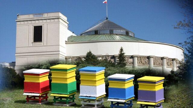26.06.2015 | Na terenie sejmu zamieszkały pszczoły – teraz na pewno gwarno tu jak w ulu