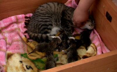 Kobieta wyrzuciła kotkę na bruk w chwili, gdy zwierzę zaczęło rodzić