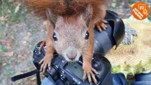 Ciekawska wiewiórka zdeklasowała konkurencję