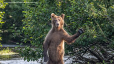 Eric Fisher/Comedy Wildlife Photo Awards 2020