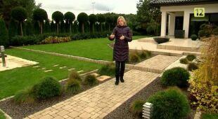 Minimalistyczny ogród ze strzyżonymi cisami (odc. 425)